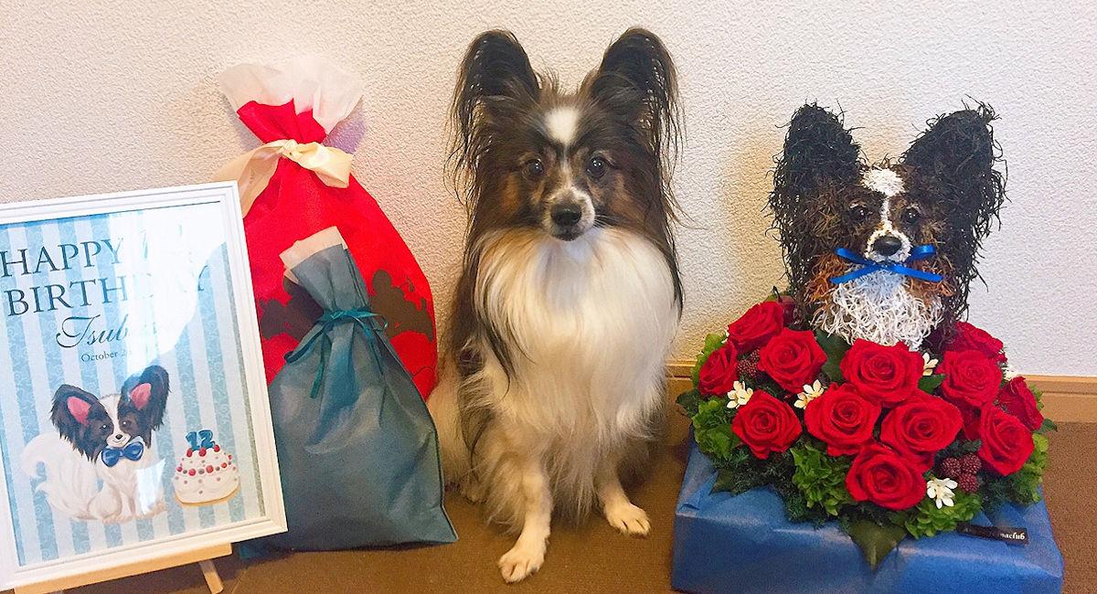 誕生日プレゼント犬好き,誕生日プレゼント猫好き、ペットの誕生日記念