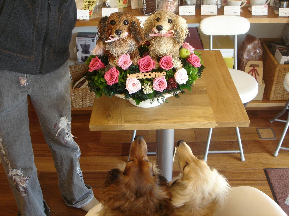 開店祝い,看板犬がいるお店,猫好き店長のお店