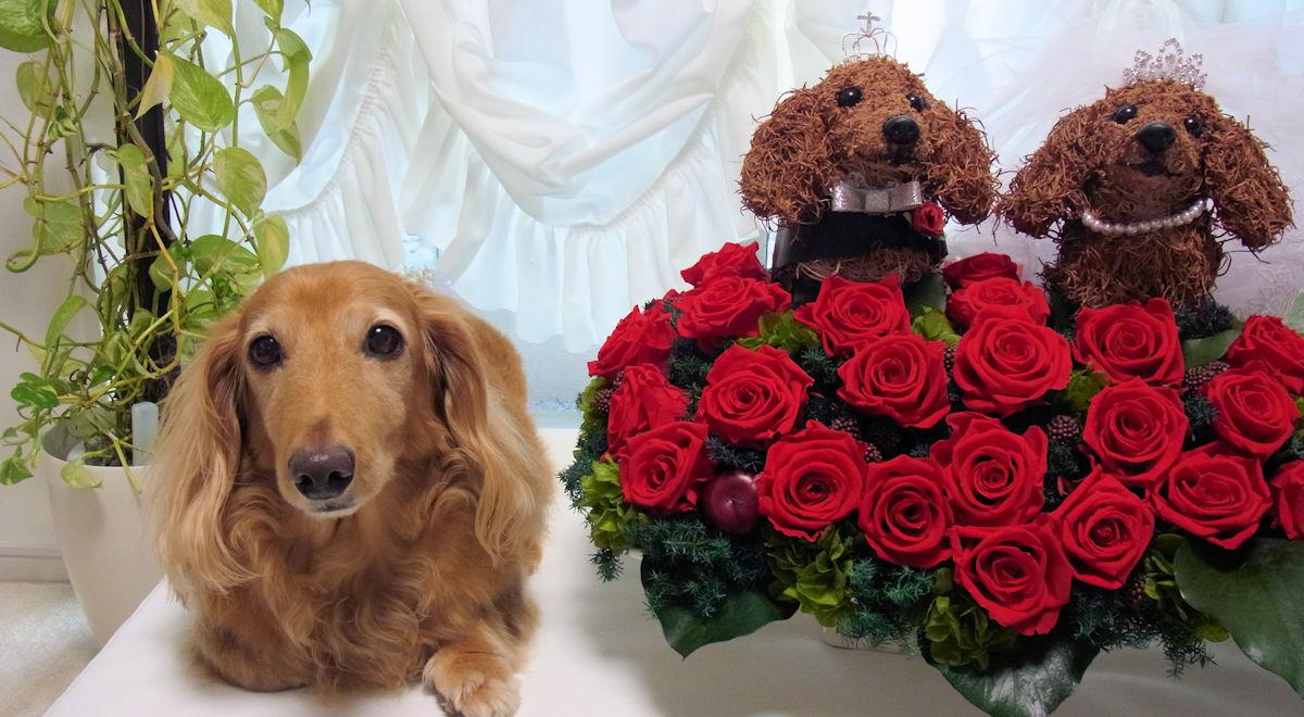結婚祝い犬好き,結婚祝い猫好き,ウェディングギフト,結婚祝いフラワーギフト販売