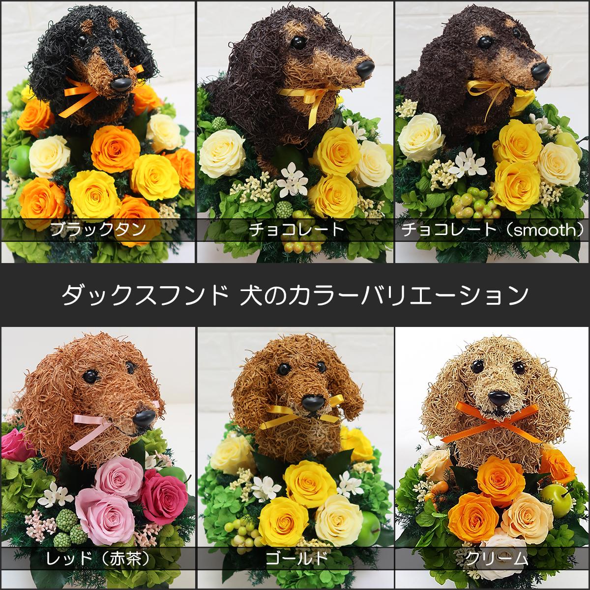 プリザーブドフラワー犬,ダックス カラーバリエーション