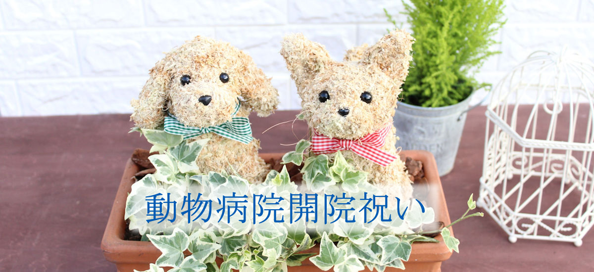 動物病院 開院祝い 動物病院開業祝い花
