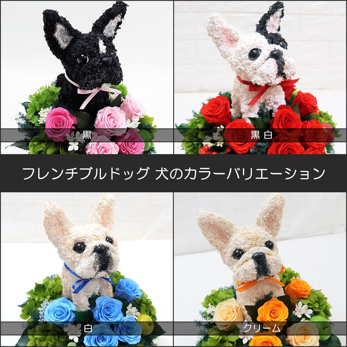 プリザーブドフラワー犬,フレンチブルドッグ カラーバリエーション