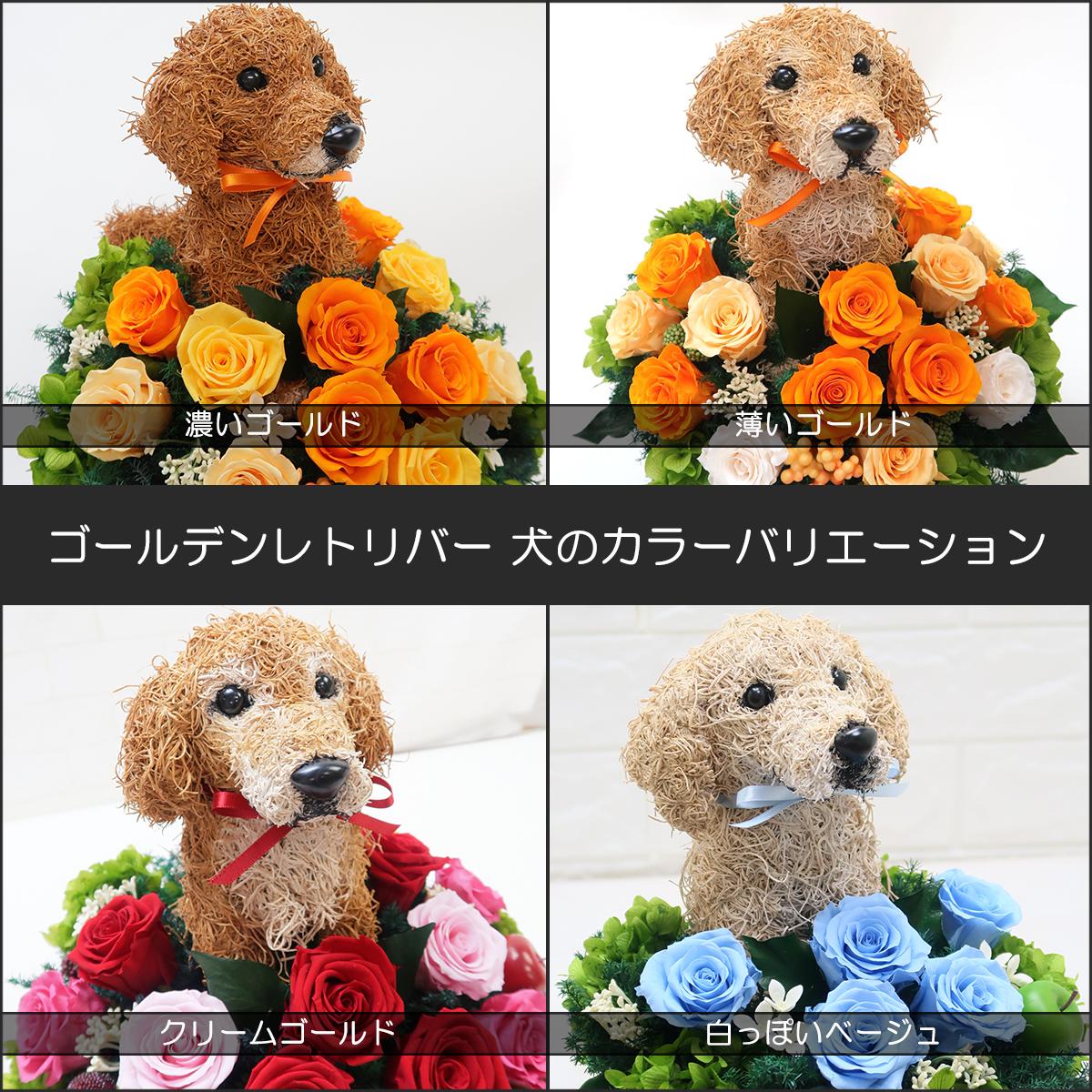 プリザーブドフラワー犬,ゴールデンレトリバー カラーバリエーション