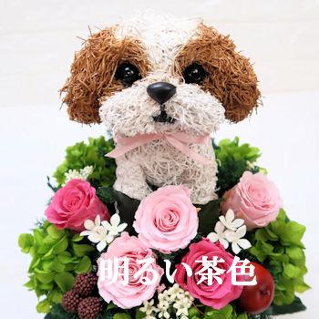 プリザーブドフラワー犬,シーズー明るい茶色