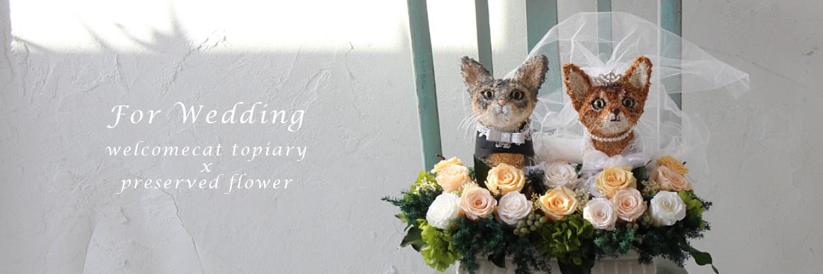 ウェルカムドール猫 ウェルカムキャット
