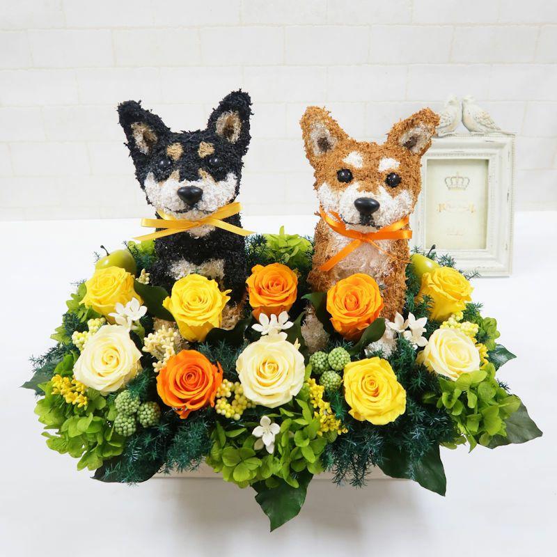 柴犬 ウェルカムドール