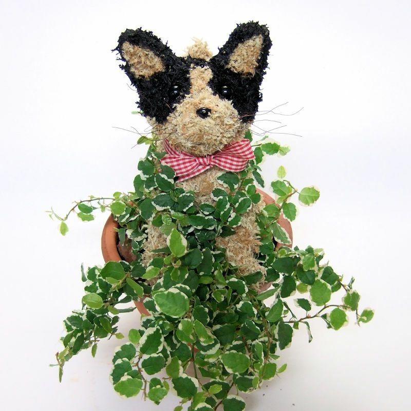 猫好きの人へ 猫のトピアリー鉢植え